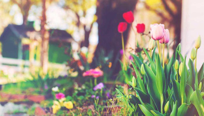 We've got spring fever – home maintenance tips